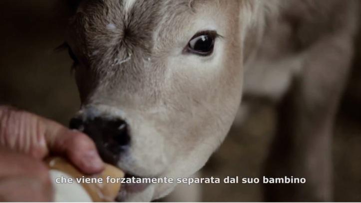 FOOD RELOVUTION Per gli animali