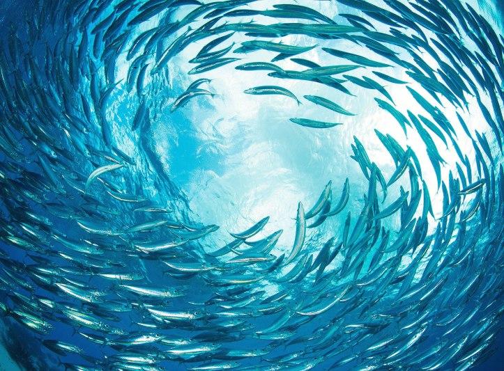 150501-bestpod-fish.jpg